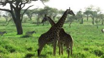 שמורת הסאלוס ספארי בטנזניה